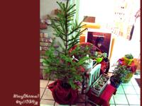 クリスマス もみの木 デスクトップ画像 無料