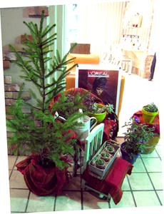 多肉植物、クリスマスガーデン